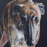 "TRIGO - the third Galgos portrait I've been commissioned to do, again on an 18x14"" stretched canvas in acrylics. Taking approximately 12hrs overall (SEPT 2018) *SOLD"